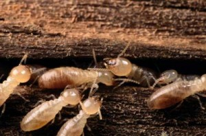 Aren\'t termites beautiful?