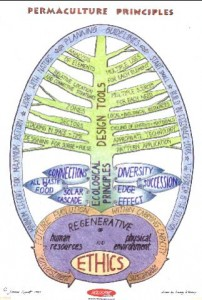 drawing of a permaculture tree